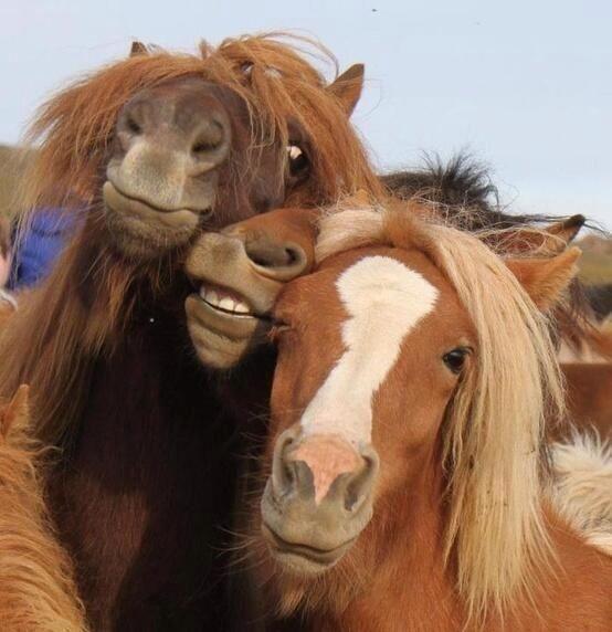 cavalli ubriachi